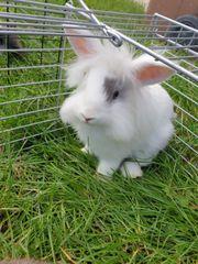 Zwei Weibliche Kaninchen