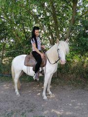 Wunderschöne Pony Stute