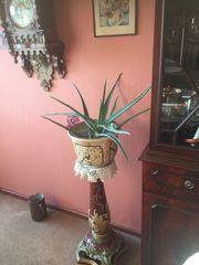 schöne pflegeleichte Aloe im Keramikübertopf