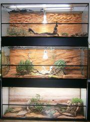 Glas-Terrarium dreistöckig