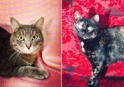 verschmuste Katzen Lisa und Bonja