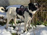 Maggie -kleine Hundemama für Alt