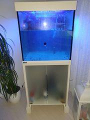 Meerwasser MP Aquarium livesand drinne