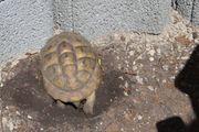 Überwinterung von Landschildkröten