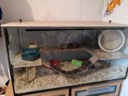 Hamsgekäfig mit Zubehör