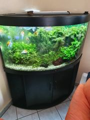 Aquarium mit Besatz und Fische