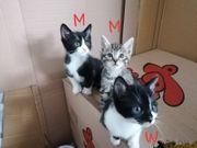 Wunderschöne Katzenkinder