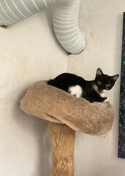 Rutzy - unsere sensible Katzendame