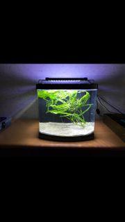 Nano Aquarium mit neuer LED-