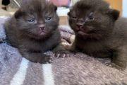 2 Kätzchen noch frei