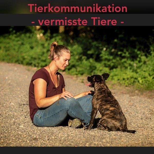 Tierkommunikation - vermisste Tiere