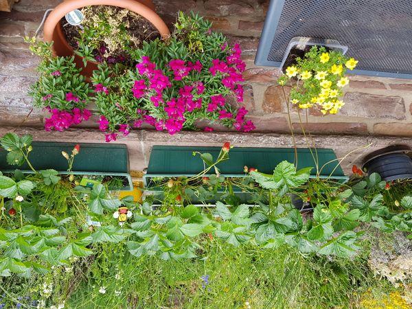 Suche Hilfe beim Gärtnern