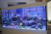 Meerwasseraquarium Eheim incpiria marine 400