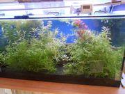 Aquarien-Pflanzen 10 Ableger