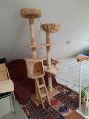 Neuer aufgebauter Katzen-Kratzbaum
