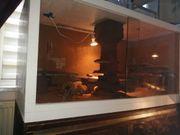 Terrarium mit kleine leopardgeckos