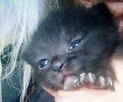 Süße kleine Katzen sind am