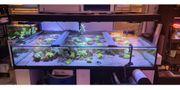 Aquarium 250x150x40 cm