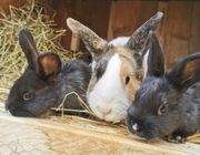 Kaninchen Mix