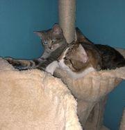 2 Katzen inkl Zubehör