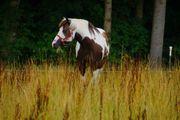 Einstellerplatz für Pony oder Pferd