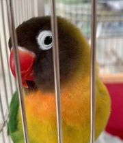 vögel ohne käfig