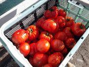 Tomatensamen 25 Stück