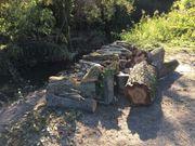 Nussbaum Stammholz Äste Meterstücke
