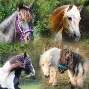 Reitbeteiligung Pflegebeteiligung Ponys suchen Reiter
