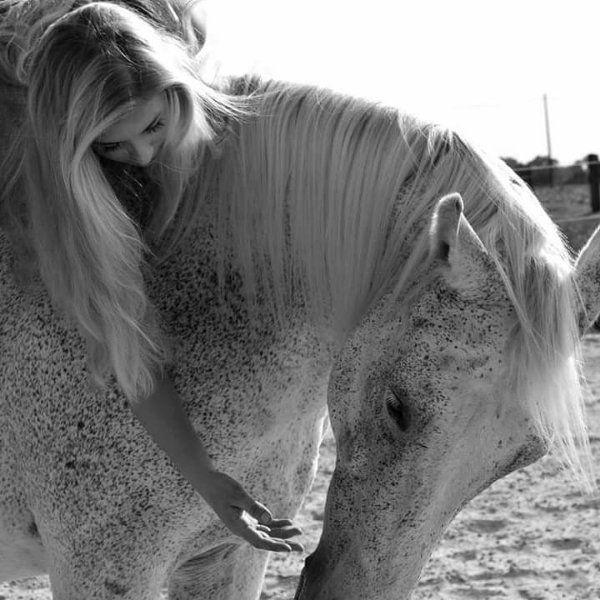 Pferd/Pony zum selbst ausbilden (Freizeit)