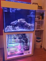 Meerwasseraquarium 300ltr mit allem Zubehör