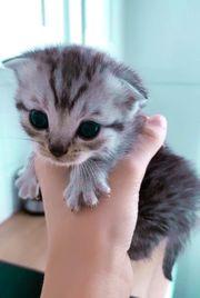 Diese wundervollen Kitten suchen ein