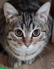 Katze 6 monate lieb und