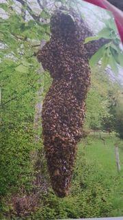 Fange Bienenschwärme