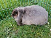 Kaninchen Damen auch bei Corona