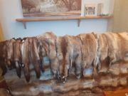 Fuchs- und Marderfelle