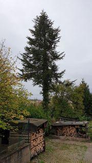 Suche Baumfäller