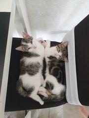 Katzenbaby männlein und weibchen