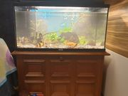 aquarium komplett mit ohne Unterschrank