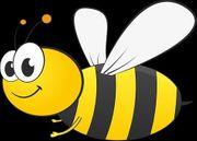 Fleißiges junges Bienchen sucht seriösen