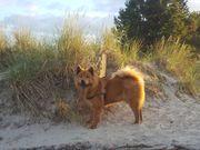 Mobiles Hundetraining in Nordfriesland