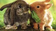 kastrierte Kaninchen Buben aus 2019