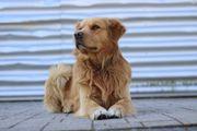 Verkaufen unseren Hund
