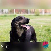 Nila- eine loyale Begleiterin