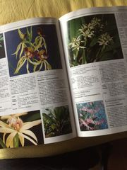 Pflanzenbuch