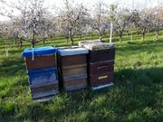 Bienenvölker Carnica Zandermaß Bienen