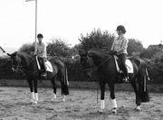Reitbeteiligung gesucht Reiterinnen suchen Pferde