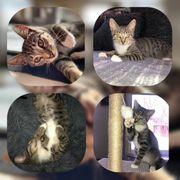 Kleine Katze Jeanny geimpft gechipt