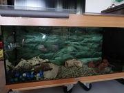 Garra Rufa Knabberfische mit Aquarium