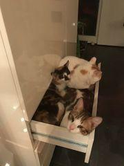 tolle Katzen Yuko Marco und